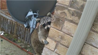 A1 Animal Removal Inc - Wildlife & Animal Control
