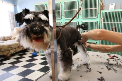 Pets Beautiful - Pet Grooming, Clipping & Washing - 604-261-5310