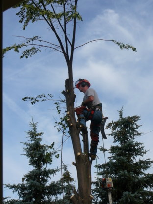 D F Wilby Tree Surgeons - Tree Consultants - 905-335-2553