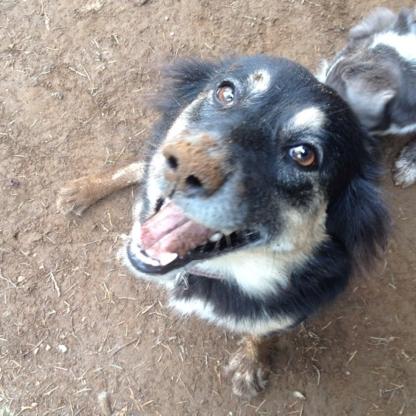 Furryornot PetCare - Pet Care Services - 604-302-1780