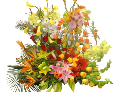 Oakville Florist Shop - Florists & Flower Shops - 905-849-8885