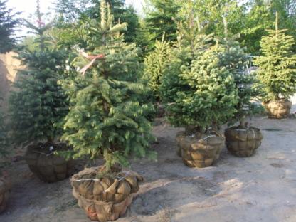 Plantex Enr - Pépinières et arboriculteurs