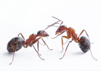 Tremblett Pest Control - Extermination et fumigation - 705-300-2114