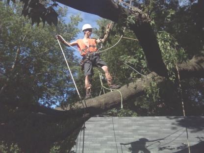 RPM Tree Services - Tree Service