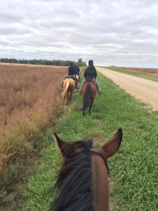Horse Riding Centres in Swift Current SK   YellowPages ca™