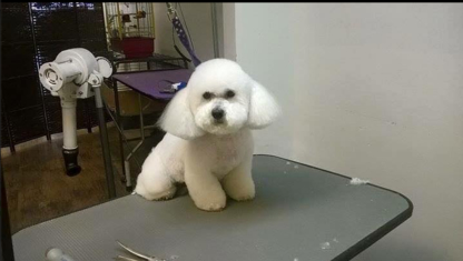 Diana's Grooming - Pet Grooming, Clipping & Washing - 902-368-1500