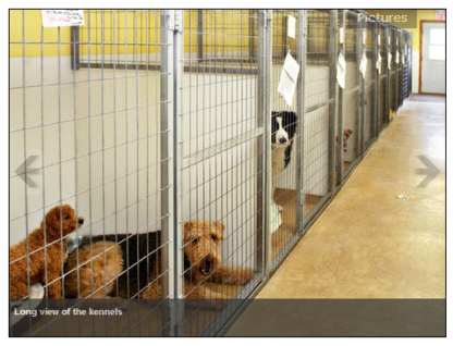 The Playpen Pet Boarding + Grooming - Kennels