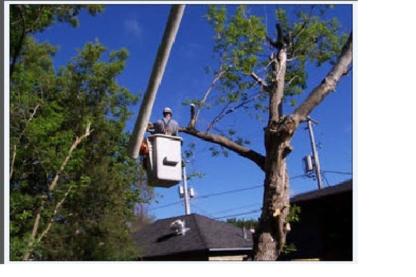 Tear N Spare Tree Care - Tree Service - 403-616-9389