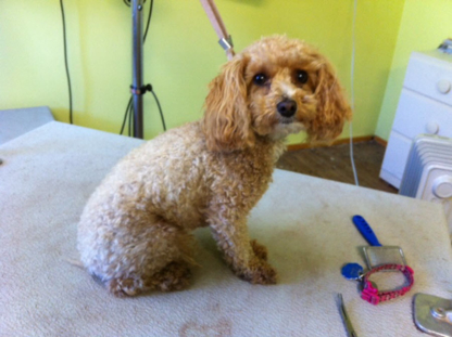 Hot Dawgs & Kool Kats Grooming - Toilettage et tonte d'animaux domestiques - 250-319-6612