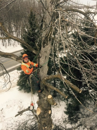 Top Notch Tree Maintenance and Removal - Tree Service - 613-808-8097