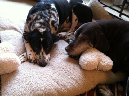 Barking Along Pet Care Services - Pet Sitting Service - 416-445-0300