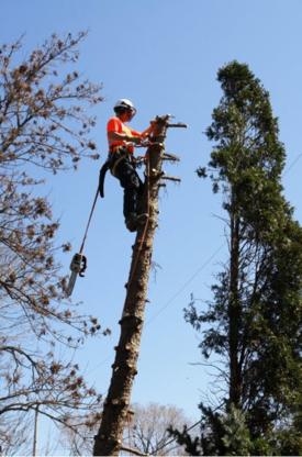 Precision Tree Care - Tree Consultants - 647-926-7721