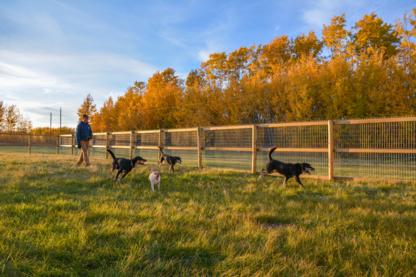 Elevation Dogs - Kennels - 780-832-0992