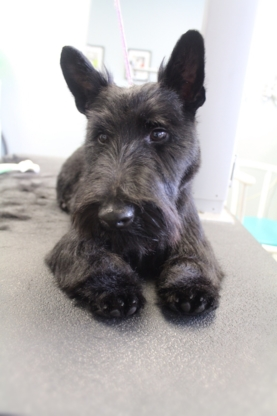 View Full Paw'tential Pet Grooming's Severn Bridge profile