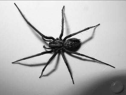 Éric Nadeau Gestion Parasitaire - Pest Control Services - 418-955-3151
