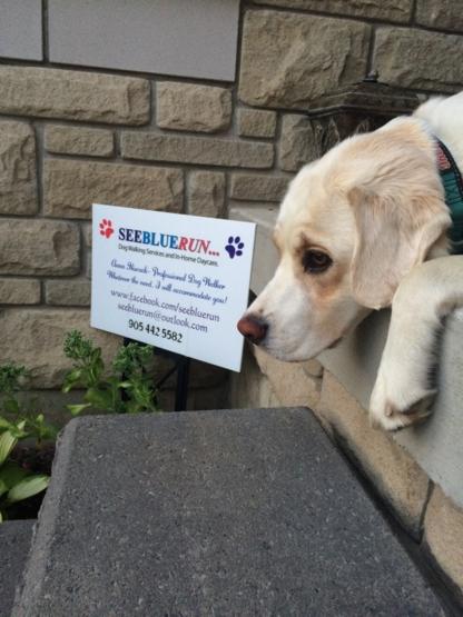 Seebluerun - Pet Care Services - 905-442-5582