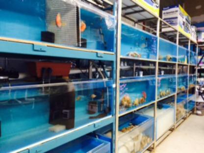 Deep Blue Aquarium - Aquariums et accessoires - 416-477-2857