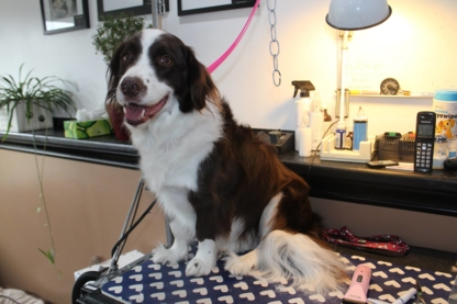 Clip & Tails Grooming Inc - Pet Grooming, Clipping & Washing - 250-832-7879
