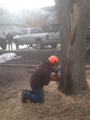 All Tree Service - Tree Service - 250-319-1855