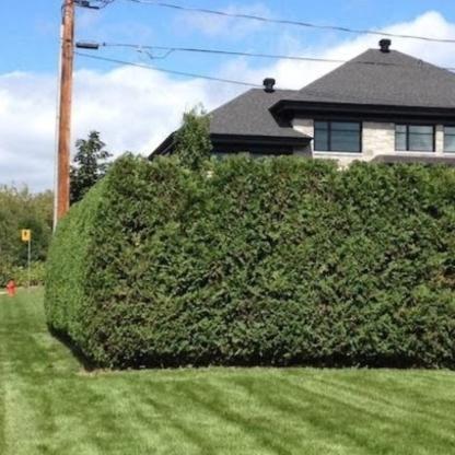 Haiexcellence - Service d'entretien d'arbres - 418-931-8427