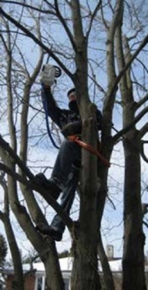 Professional Tree Services - Tree Consultants - 416-577-2716