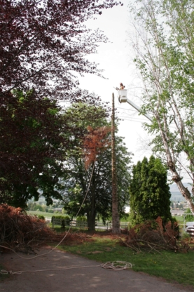 All Pro Tree & Landscaping Services