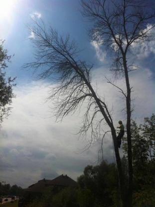 Émondage Laviolette - Tree Service