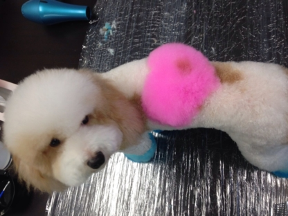 Fluffy' Spa - Pet Grooming, Clipping & Washing - 905-709-9908
