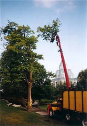 Hackett & Hill Tree Specialists - Tree Service