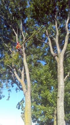 Voir le profil de Services d'arbres Olivier - Laval