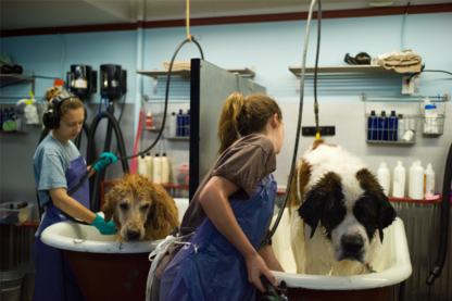 It's Still A Dogs Life Services Inc - Pet Grooming, Clipping & Washing