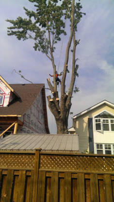 Clearview Tree Service - Tree Service - 705-294-1314