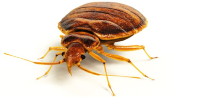 Extermination Guylaine Tremblay - Pest Control Services - 514-216-8005