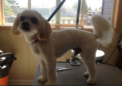 Groomin' Room - Pet Grooming, Clipping & Washing
