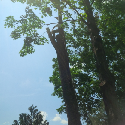 The Real Tree Masters Inc. - Tree Consultants - 416-272-3534