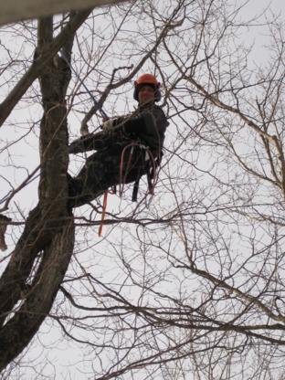 Arbrexcel - Tree Service - 418-774-0670