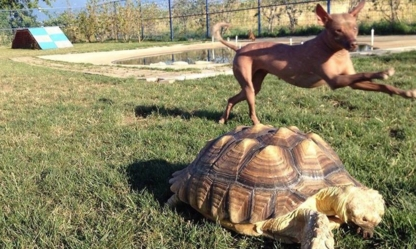 The Tortoise & The Hairless Pet Services - Pet Care Services - 604-703-3248