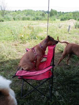 Tail Waggin' Dog Ranch Inc - Kennels - 519-317-2037