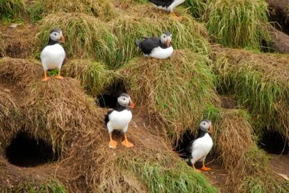 O'Brien's Whale & Bird Tours - Attractions touristiques - 709-753-4850