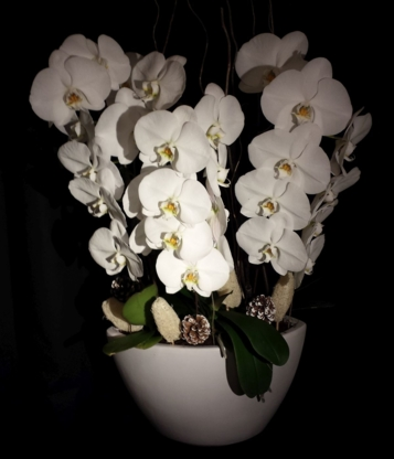 Krista's Orchids - Florists & Flower Shops - 647-866-1900