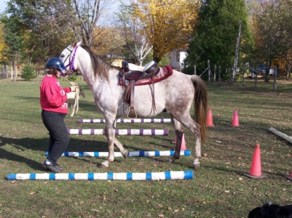 Riding Apparel & Equipment in Orillia ON | YellowPages ca™