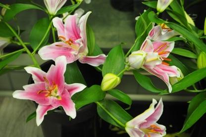 Astra Florists - Florists & Flower Shops - 416-787-1415