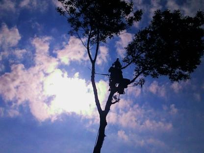 Arbre Atout - Service d'entretien d'arbres - 514-232-5443