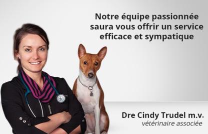 Clinique Vétérinaire Cimon - Vétérinaires
