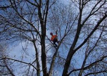 Services Forestier SD - Service d'entretien d'arbres