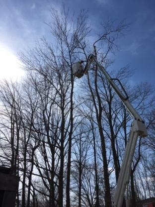 Ott's Tree Service - Tree Service - 416-833-4957