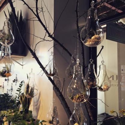 Acanthus Floral & Botanicals - Florists & Flower Shops - 613-461-0113