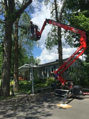 MD Émondage Professionnel - Service d'entretien d'arbres