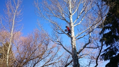 Porcupine Tree Care - Tree Service - 306-281-8675
