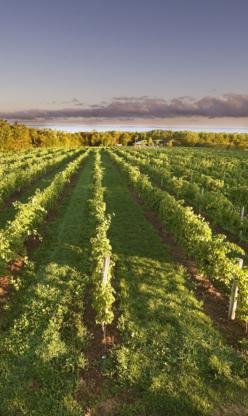 Jost Vineyards - Wineries - 902-257-2636